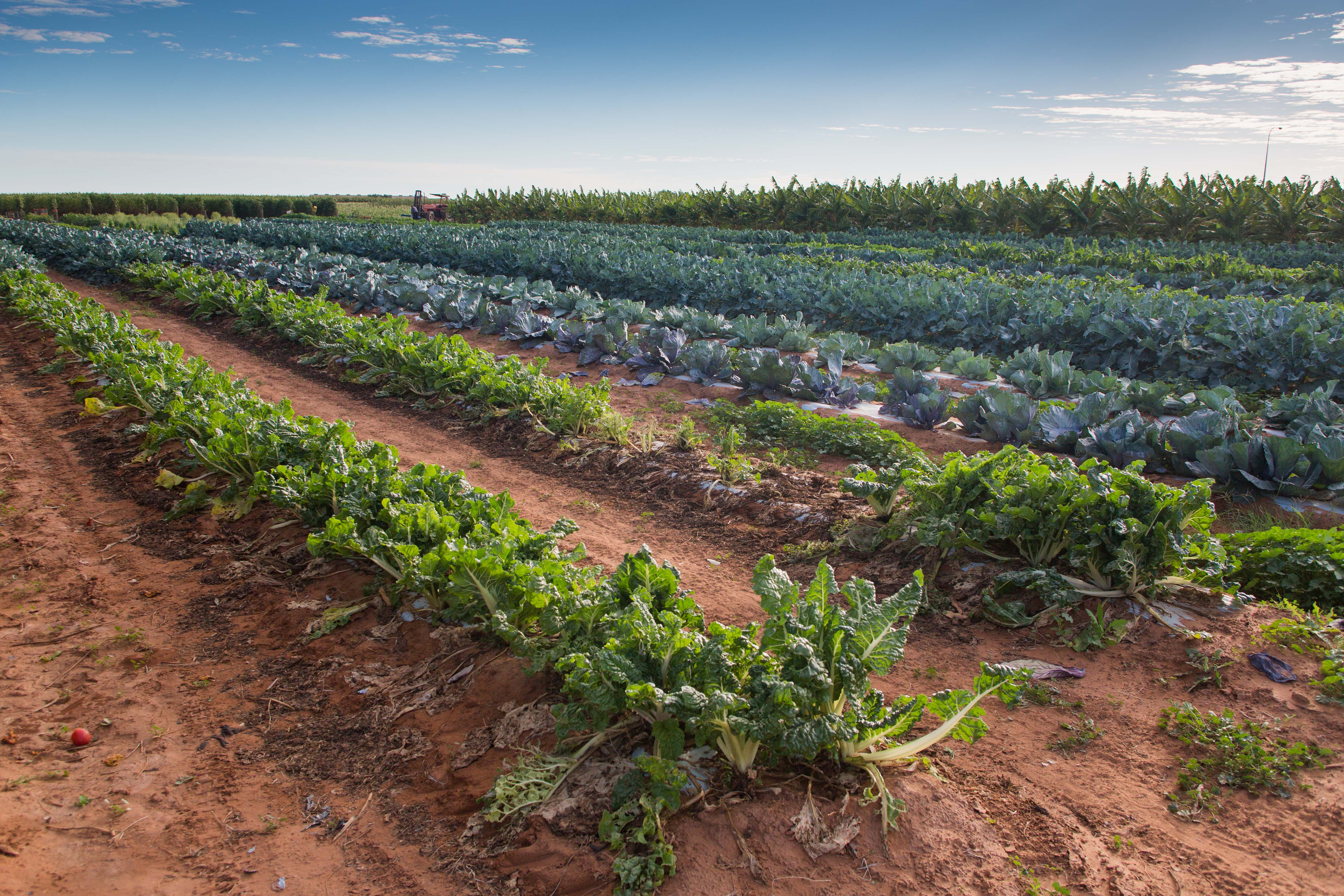 ecological agriculture in Western Australia